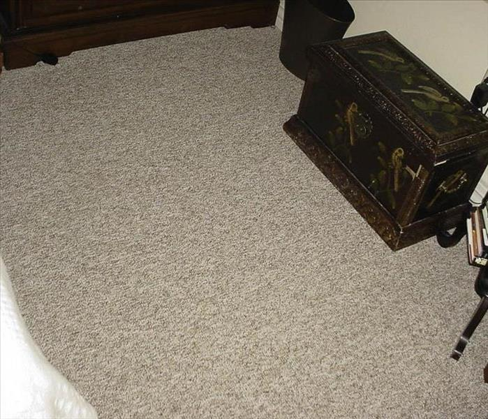 Carpet Cleaning After Dog Mess Wildwood, MO After
