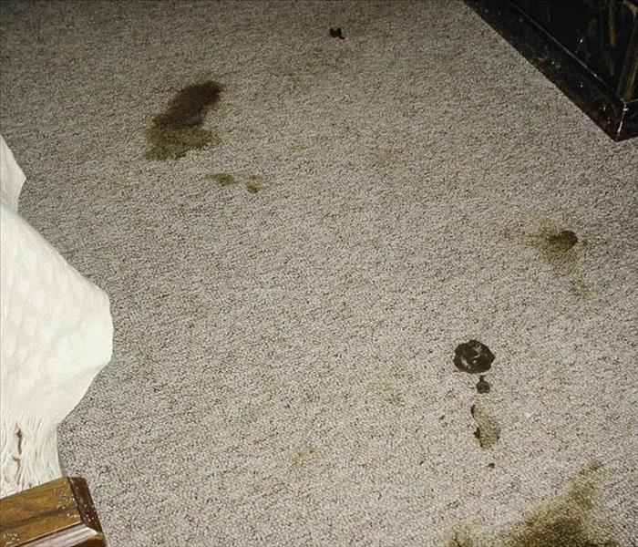 Carpet Cleaning After Dog Mess Wildwood, MO Before