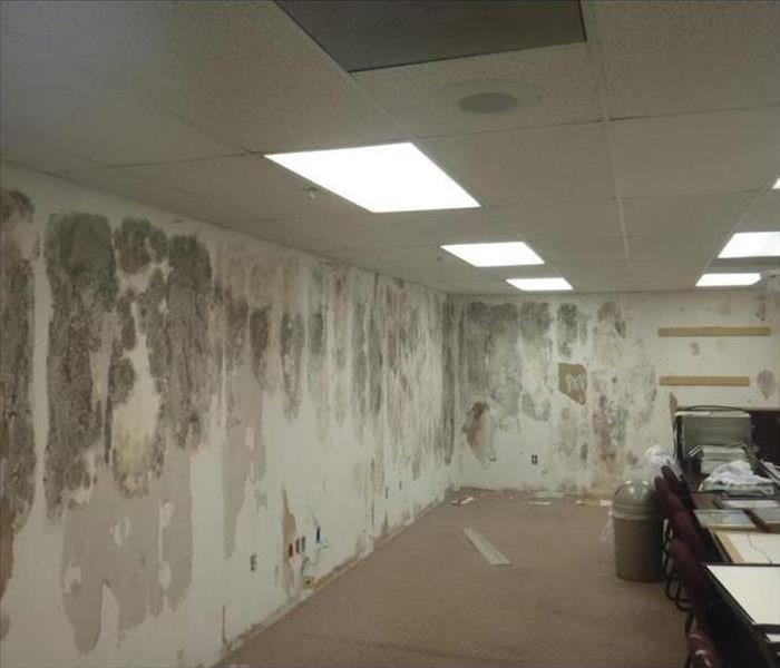 Mold Remediation Commercial Mold Remediation in Chesterfield,Mo