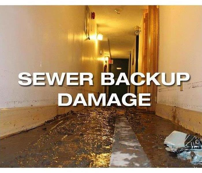 Biohazard Sewage Cleanup and Restoration in Chesterfield, MO